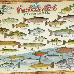 Puzzle Freshwater Fish of North America 1000 pièces Cobble Hill
